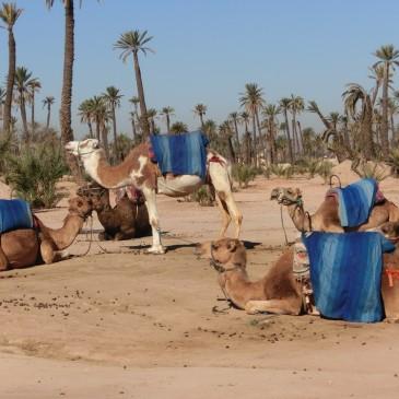 マラケシュマラソン(モロッコ)の基本情報